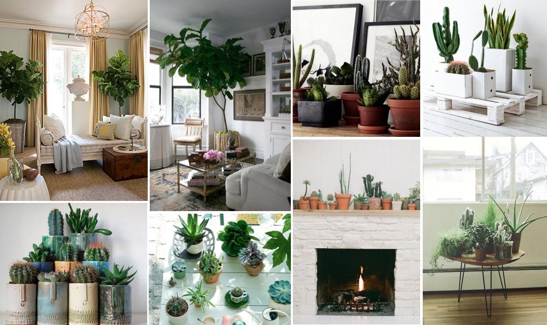 houseplanthunting