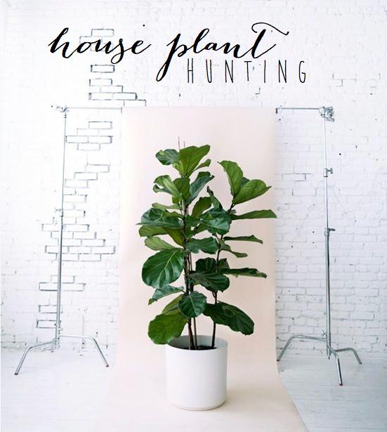 houseplanthunting1